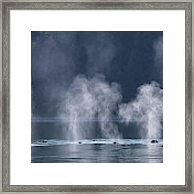 Synchronized Swimming Humpback Whales Alaska Framed Print by Nathan Bush