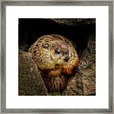 The Groundhog Framed Print by Bob Orsillo