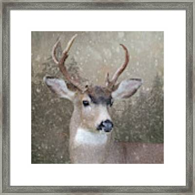 The Hart Of Winter Framed Print by Sally Banfill