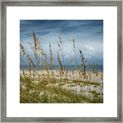 Through The Sea Oats Framed Print by Judy Hall-Folde