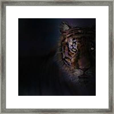 Tiger In The Dark Framed Print by Darren Cannell