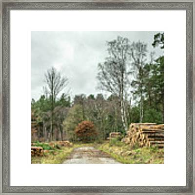 Track Through The Wood Framed Print by Nick Bywater