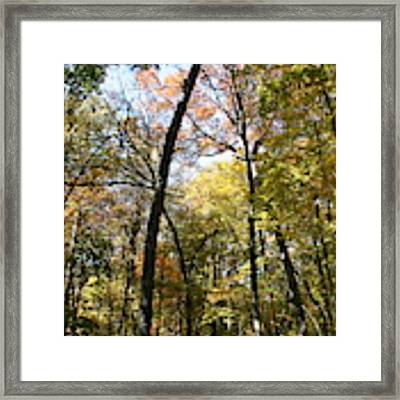 Transitioning Merwin Canopy Framed Print by Dylan Punke