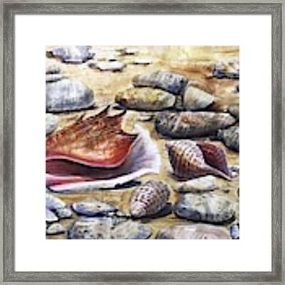 Treasures Of The Sea Framed Print by Katerina Kovatcheva