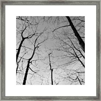 Tree Series 2 Framed Print by Jeni Gray