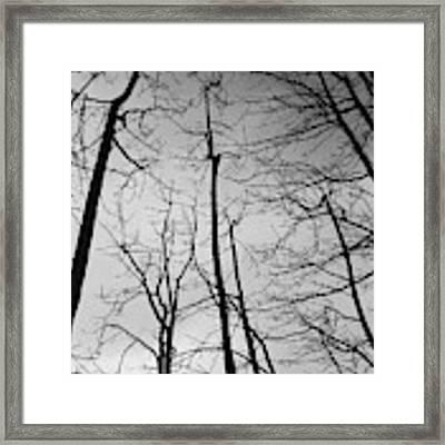 Tree Series 3 Framed Print by Jeni Gray