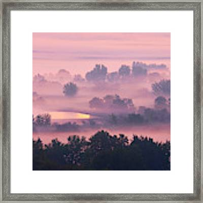 Trees In The Mist Framed Print by Whitney Goodey