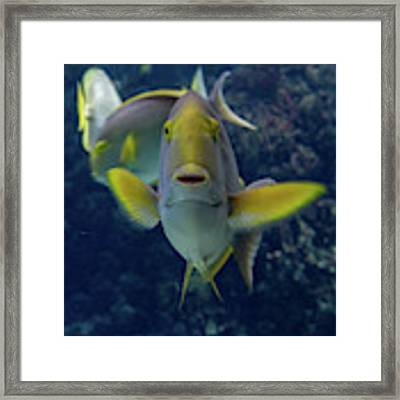 Tropical Fish Poses. Framed Print by Anjo Ten Kate