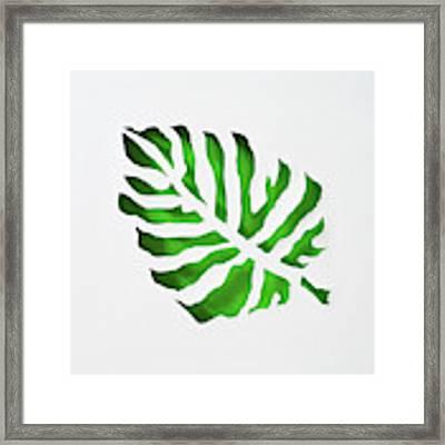 Tropical Framed Print by Phyllis Howard