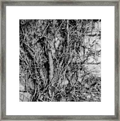 Vine Highway Framed Print by Jeni Gray