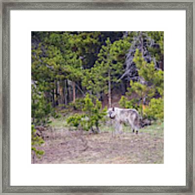W755 Framed Print by Joshua Able's Wildlife