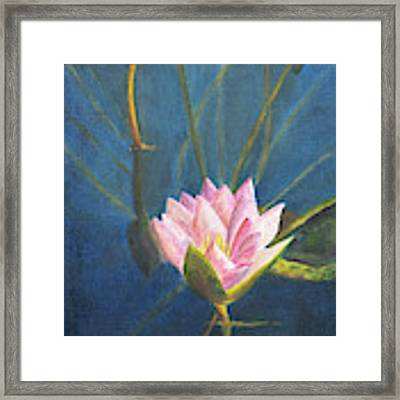 Water Lily Framed Print by Nancy Strahinic