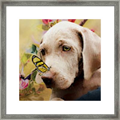 Weimaraner Puppy With Butterfly - Painting Framed Print by Ericamaxine Price
