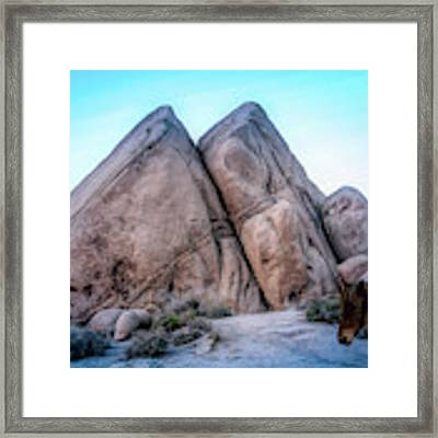 We'll Ride Them Someday Framed Print by Alison Frank
