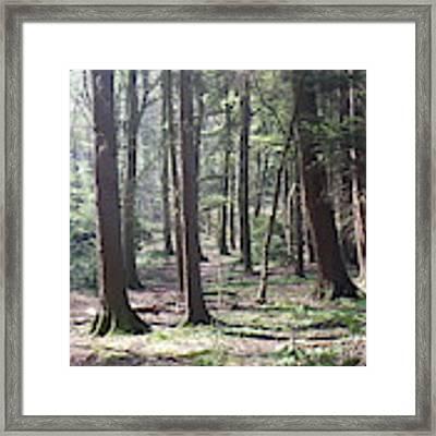 Woodlands Photo 4 Framed Print by Harry Potter