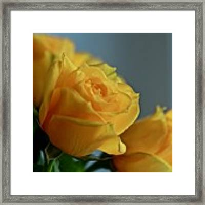 Yellow Roses Framed Print by Ann E Robson