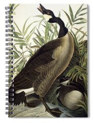 Designs Similar to Canada Goose