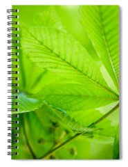 Chestnut Photographs Spiral Notebooks