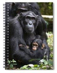 Designs Similar to Chimpanzee And Infant Uganda