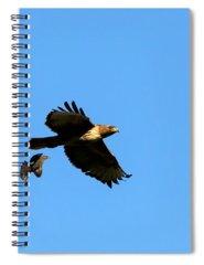 Cowbird Photographs Spiral Notebooks