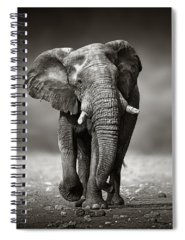 Male Photographs Spiral Notebooks