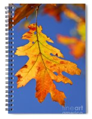 Fall Foliage Spiral Notebooks