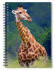 Head And Shoulders Spiral Notebooks