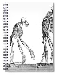 Designs Similar to Human Evolution 1883