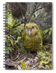 Critically Endangered Photographs Spiral Notebooks