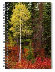 Beauty In Nature Spiral Notebooks