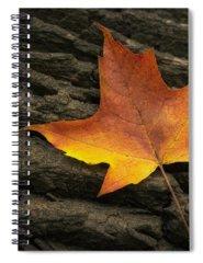 Tree Stump Spiral Notebooks