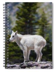 Goat Rocks Wilderness Photographs Spiral Notebooks
