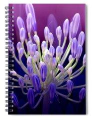 Purple Spiral Notebooks