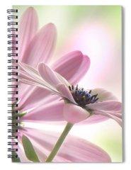 Daisy Spiral Notebooks