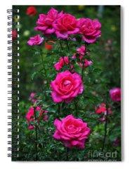 Rosebush Photographs Spiral Notebooks