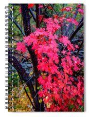 Imagery Photographs Spiral Notebooks