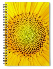 Sunflower Seeds Photographs Spiral Notebooks