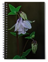 Aquilegia Photographs Spiral Notebooks