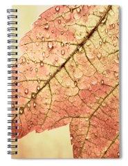 Designs Similar to Brown Autumn by Carol Leigh