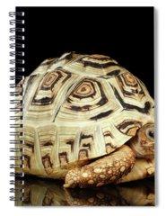 Reptile Spiral Notebooks