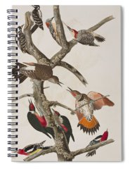 Red Bellied Woodpecker Spiral Notebooks