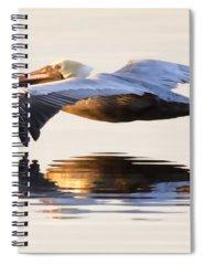 Brown Pelican Spiral Notebooks