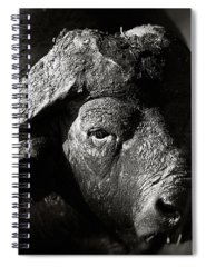 South Buffalo Photographs Spiral Notebooks