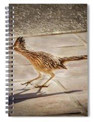 Greater Roadrunner Photographs Spiral Notebooks