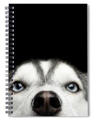 Husky Spiral Notebooks
