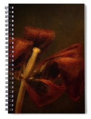 Designs Similar to Dried Tulip Blossom 2