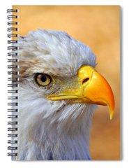 Bald Eagle Spiral Notebooks