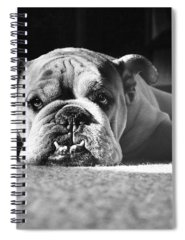 English Bulldog Photographs Spiral Notebooks