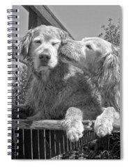 Golden Retriever Photographs Spiral Notebooks