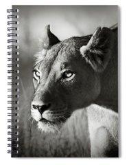 Designs Similar to Lioness Stalking